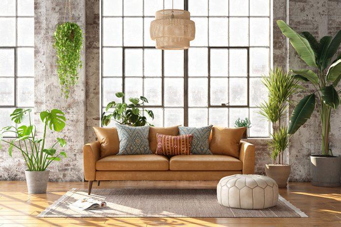 plantes-intérieur