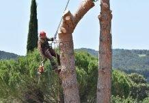 Ce qu'il faut savoir sur l'élagage des arbres