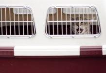 Conseils pour voyager avec votre animal de compagnie